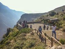 Czekać kondory w Colca dolinie Zdjęcia Stock