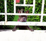 Czekanie właściciela smutny pies Zdjęcie Royalty Free