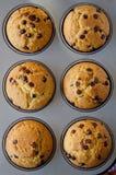 czekolada opuszcza muffins Obrazy Royalty Free
