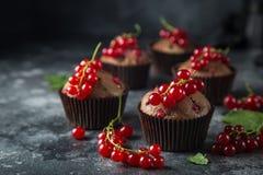 Czekoladowego i czerwonego rodzynku muffins zdjęcie royalty free