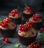 Czekoladowego i czerwonego rodzynku muffins zdjęcie stock