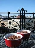 czekoladowego mousse weganin Obraz Royalty Free