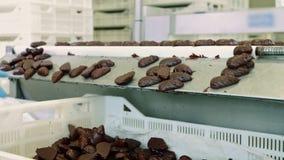 Czekoladowi cukierki kłama na konwejerze Cukierek fabryka zbiory wideo