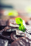 Czekoladowi Miętowi ciastka Mennica miętówka mentol Czarna czekolada z miętową śmietanką Czarna czekolada z nowym farszem Zdjęcia Stock