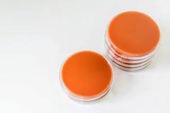 Czekoladowy agar jest selekcyjnymi środkami dla bakterii wzrostowych (CA) Fotografia Royalty Free