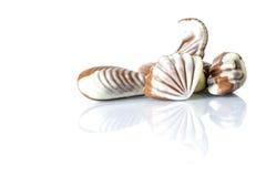 Czekoladowy cukierek w postaci morza łuska na bielu stole z odbiciem odizolowywającym Zdjęcia Stock