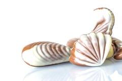Czekoladowy cukierek w postaci morza łuska na bielu stole z odbiciem odizolowywającym Fotografia Royalty Free
