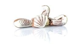 Czekoladowy cukierek w postaci morza łuska na bielu stole z odbiciem odizolowywającym Fotografia Stock
