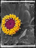 Czerń i kolor żółty Fotografia Royalty Free