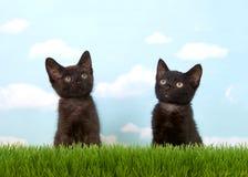 Czerń koci się obsiadanie w trawy przyglądający up Fotografia Royalty Free
