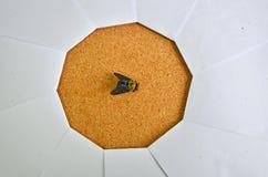 Czerń mamrocze pszczoły w ostrości papierowa żaluzja obraz stock