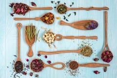 Czerń, owoc, chabrowa, poślubnik, dziki wzrastał, biały lotos i rooibos herbaciani w drewnianych łyżkach na błękitnym tle Obraz Stock