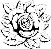 czerń róży biel Royalty Ilustracja