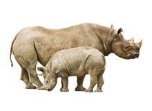 czerń zagrażająca nosorożec Zdjęcia Royalty Free