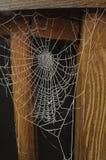 czerń marznący odosobniony spiderweb Zdjęcie Royalty Free