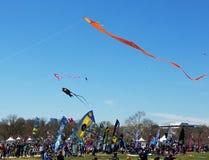 Czereśniowego okwitnięcia kani festiwal na national mall w Waszyngton, DC zdjęcia stock