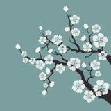 Czereśniowy okwitnięcie, Sakura kwitnie na błękitnym tle ilustracja wektor