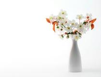 Czereśniowa gałązka w kwiacie w wazie zdjęcia royalty free