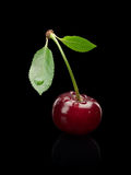 Czereśniowa jagoda na zielonym małym badylu. Fotografia Royalty Free
