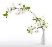 czereśniowa kwiat gałązka zdjęcie stock