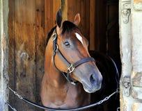 Czereśniowa stróżówka - Końska przystań Saratoga zdjęcia stock