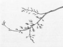 Czereśniowego drzewa atramentu kwiatonośny obraz ilustracja wektor