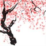 Czereśniowego drzewa okwitnięcie ilustracja wektor