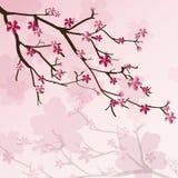 Czereśniowego drzewa tło Obraz Royalty Free