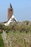 czereśniowego kościelnego holenderskiego kwiecenia reformowani drzewa zdjęcie stock