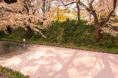 Czereśniowego okwitnięcia blizzardHanafubuki i wiśni carpetHanaikada przy zewnętrzną fosą Hirosaki park, Aomori, Tohoku, Japonia Zdjęcia Stock