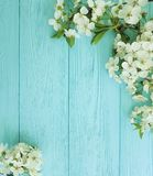 Czereśniowego okwitnięcia gałąź karty granicy sezonu romans na błękitnym drewnianym tle obraz royalty free