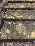 Czereśniowego okwitnięcia płatków spadek na kamiennych schodkach zdjęcia royalty free