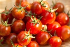 Czereśniowego pomidoru żniwo przy jarzynowym ogródem Obraz Stock