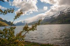 Czereśniowi drzewa na przedpolu i fjord z śnieżną górą Obrazy Stock