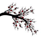 Czereśniowi okwitnięcia Drzewni fotografia stock