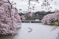 Czereśniowi okwitnięcia i paddle łodzie przy Chidorigafuchi fosą, Chiyoda, Tokio, Japonia Selekcyjna ostrość Fotografia Royalty Free