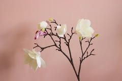 Czereśniowi okwitnięcia na różowym tle Zdjęcia Stock