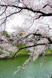 Czereśniowi okwitnięcia przy Chidorigafuchi fosą, Chiyoda, Tokio, Japonia w wiośnie Zdjęcia Stock