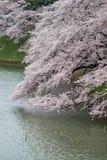 Czereśniowi okwitnięcia przy Chidorigafuchi fosą, Chiyoda, Tokio, Japonia w wiośnie Zdjęcie Royalty Free