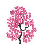 Czereśniowi okwitnięcia Sakura Czereśniowy drzewo Obrazy Royalty Free