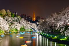 Czereśniowi okwitnięcia wokoło Chidorigafuchi parka, Tokio, Japonia obraz royalty free