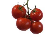 Czereśniowi pomidory na gałąź Obrazy Royalty Free