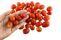 Czereśniowi pomidory w ręce Obrazy Royalty Free