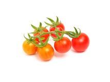 czereśniowy dojrzały pomidor Obraz Stock