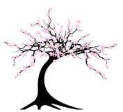 Czereśniowy drzewo royalty ilustracja