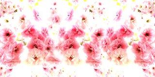 Czereśniowy kwiat na białym tle panorama fotografia royalty free