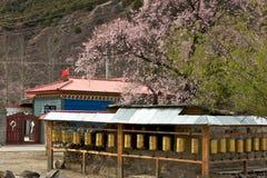 Czereśniowy kwitnienie, Nyingchi, Tybet fotografia stock
