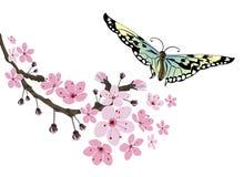 Czereśniowy okwitnięcie i motyl Zdjęcia Royalty Free
