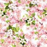 Czereśniowy okwitnięcie, jabłko menchii kwiaty Kwiecisty wielostrzałowy wzór akwarela royalty ilustracja