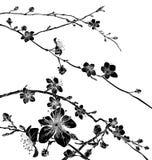 Czereśniowy okwitnięcie Kwitnie tło wzór ilustracji